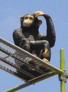 <ユースク>春日井の国道19号沿い、足場オブジェ天辺にチンパンジー
