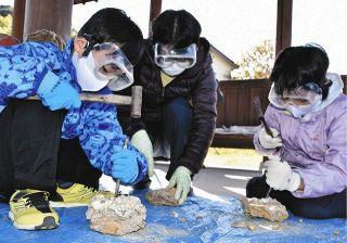 親子ら化石の発掘体験 袋井で自然史学ぶ教室
