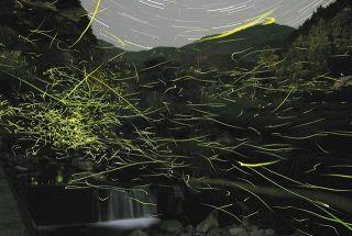 闇夜たどる光の道 静岡の水見色川でホタル乱舞