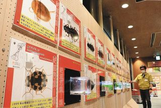 県の絶滅危惧種 こんなに 昆虫館 237種を標本などで紹介 21年ぶり再発見 カワラゴミムシも