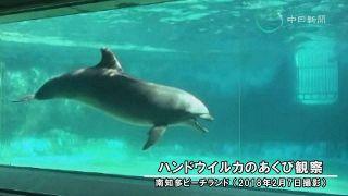 ハンドウイルカのあくびを確認