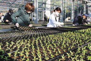 湖西市でボランティアら 花苗植え替え