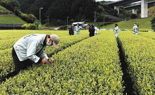 一番茶の生育良好 静岡経済連調査