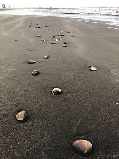 地震前兆?不安視も…九十九里浜に大量ハマグリの謎