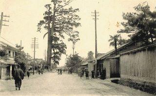巨大な霊木 道に鎮座 「高岡・末広町通り(1907〜18年)」