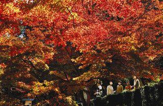 森町・大洞院で紅葉見頃