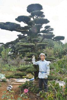 250歳イヌマキ、県庁に 浜松の天野さん半世紀手入れ