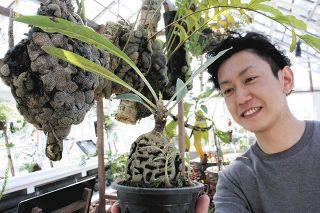 「アリ植物」の魅力広めたい 全国唯一の専門農家、北名古屋に